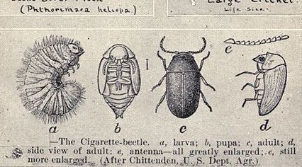 Detail from a book page with illustrations of insects and pests.