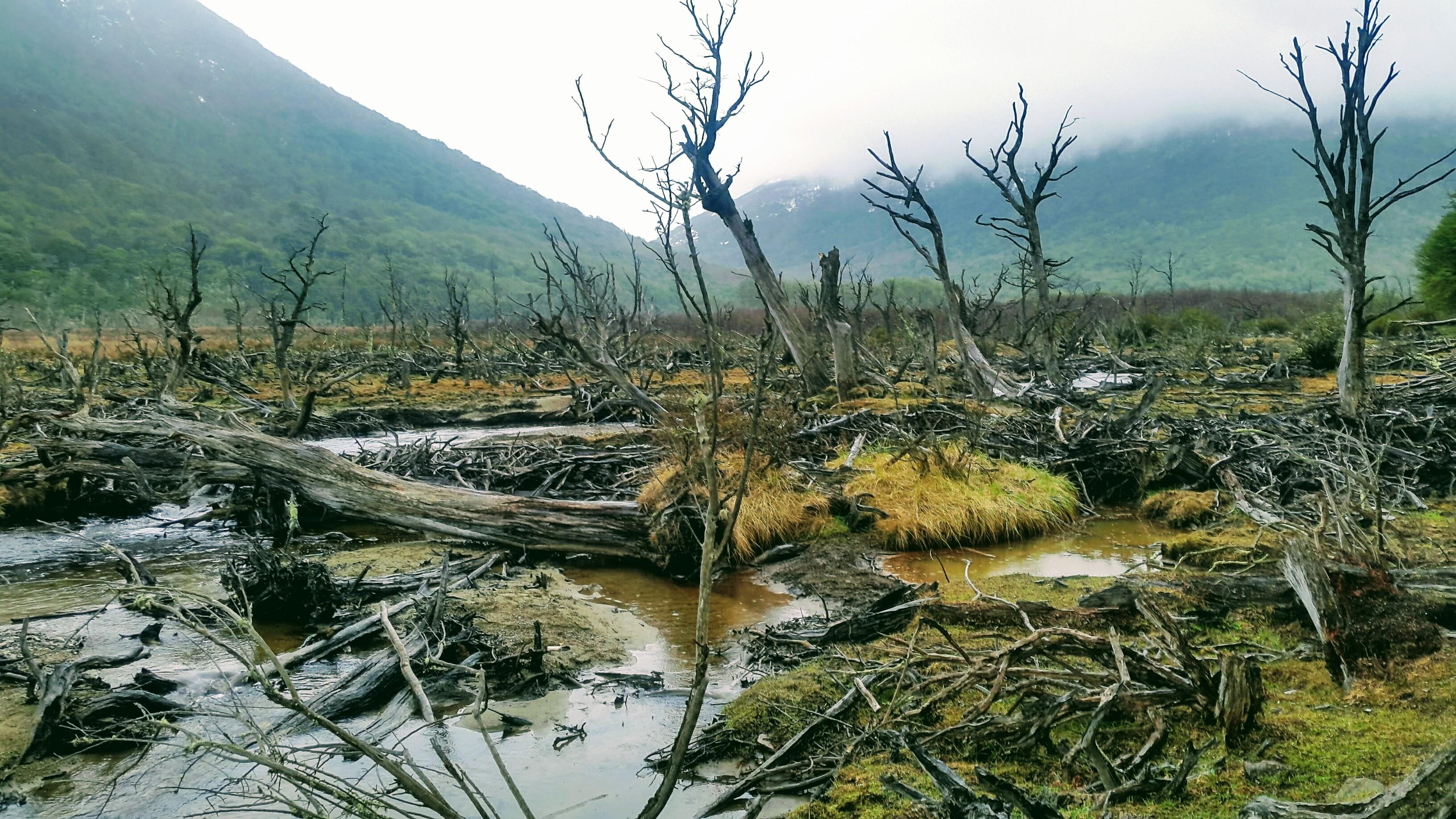 Ruinated landscapes of imperial failed adaptations. © 2018 Mara Dicenta.