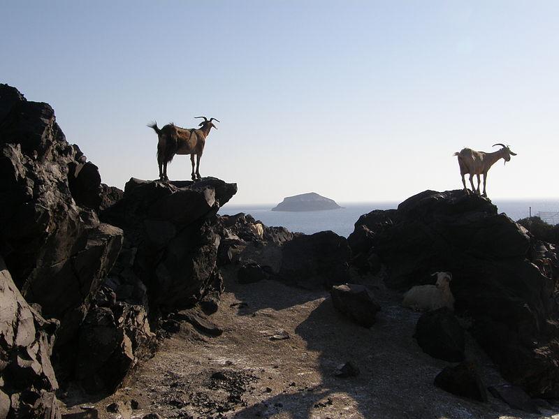 Goats on the island of Palea Kameni, Santorini. CC BY 4.0 Yarl.