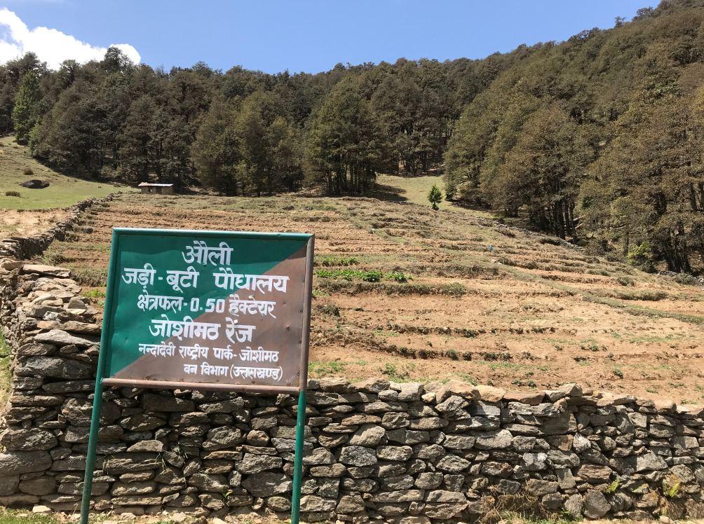 Photo of Auli Medicinal Herb Plantation.