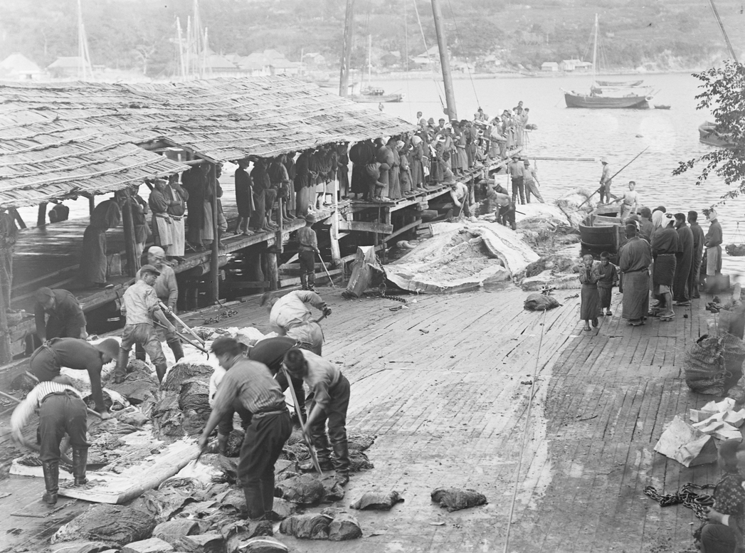 Photo of a Japanese whaling station in 1910.