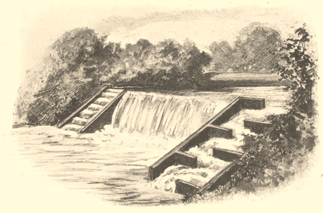 Illustration of fish ladders.
